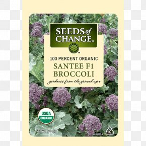 Broccoli Sprouts - Spring Greens Herb Lettuce Seeds Of Change PNG