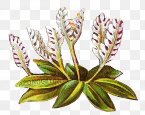 Arrowroot Family Terrestrial Plant - Bouquet Of Flowers Drawing PNG