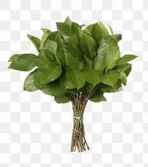 Eucalyptus - Flower Bouquet Gaultheria Shallon Leaf Gum Trees PNG