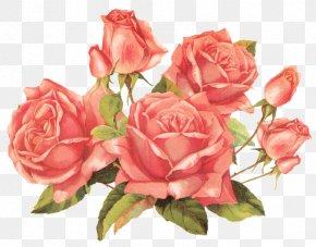 Rose - Rose Flower Bouquet Clip Art PNG