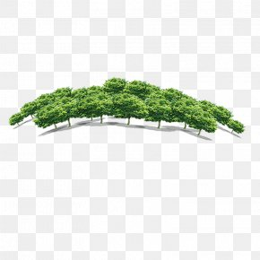 Forest - Quancheng Real Estate Tree Forest Fang Holdings Limited PNG