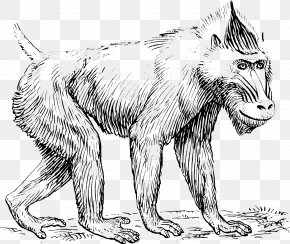 Monkey - Mandrill Baboons Primate Drawing Clip Art PNG
