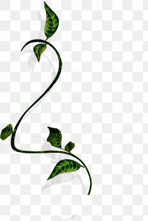 Twining Vine Wood Material - Branch Vine Wood Clip Art PNG