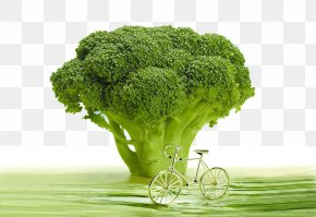 Broccoli And Bicycles - Air Pollution Inflammation Dietary Supplement Raw Foodism Health PNG