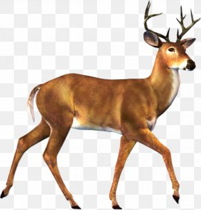 Deer Image - Roe Deer Moose Clip Art PNG