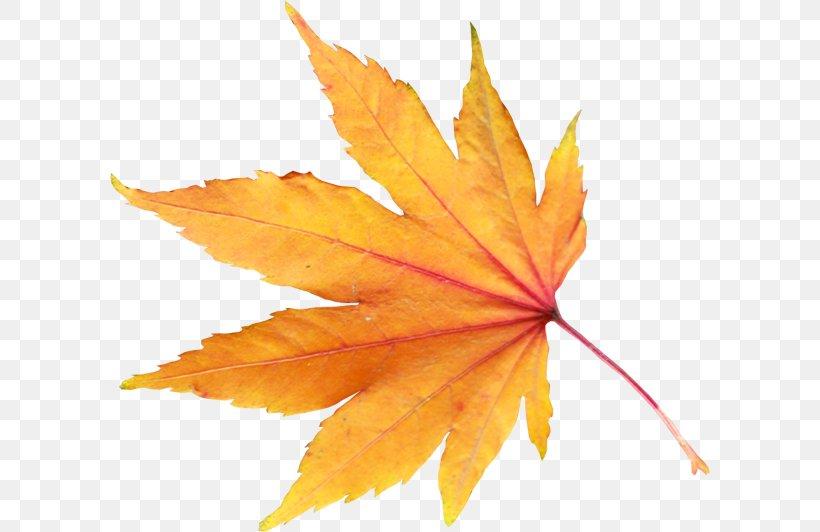 Autumn Leaf Color, PNG, 600x532px, Autumn, Autumn Leaf Color, Color, Image File Formats, Leaf Download Free