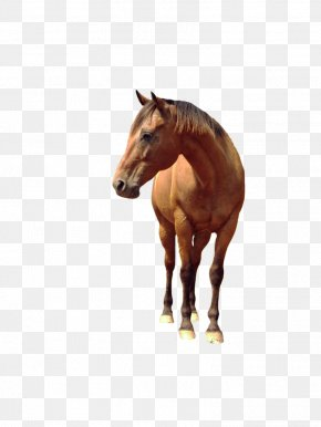 Horse Image - Horse PNG
