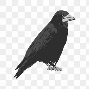 Raven - Rook Bird Common Raven Clip Art PNG