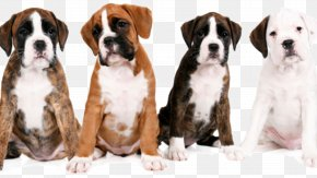 Chow Chow Dog - Valley Bulldog Boxer Dog Breed Kennel Club PNG