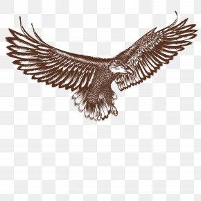 Vector Flying Eagle - Bald Eagle Hawk Bird PNG
