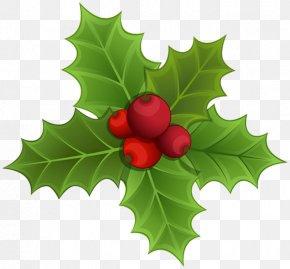 Mistletoe - IPhone 7 Plus Mistletoe Christmas Clip Art PNG