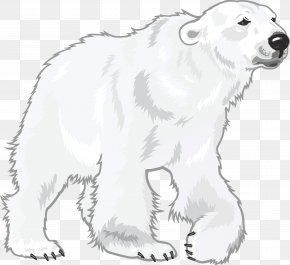 Polar White Bear - Polar Bear Cuteness PNG