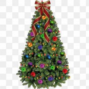 Trees - Christmas Tree PNG