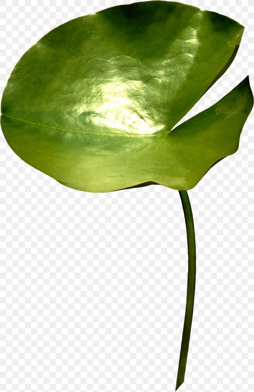 Leaf Green Plant Stem, PNG, 1036x1600px, Leaf, Arum, Green, Plant, Plant Stem Download Free
