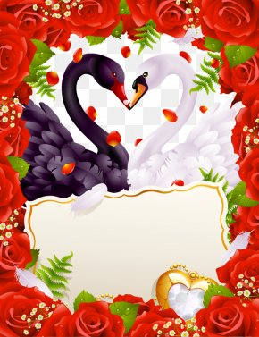 Vector Swan - Wedding Invitation Greeting Card Valentines Day PNG