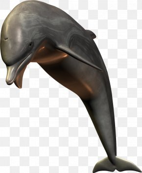 Dolphin Image - Dolphin Shark PNG
