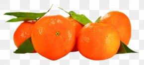 Orange - Orange Tangerine Fruit PNG
