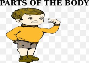 Part Of Body - Human Body Clip Art PNG