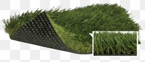 Lawn Artificial Turf Fescues Thatch Polypropylene PNG
