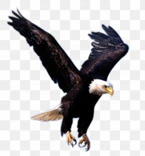 Flying Eagle Image, Free Download - Eagle Clip Art PNG