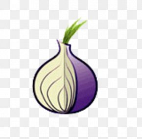 Onion - Tor .onion Onion Routing Web Browser Internet PNG