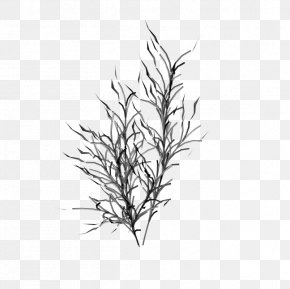 M Leaf Plant Stem Grasses LineBijouterie Poster - Black & White PNG