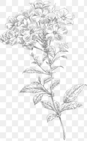 Line Drawing Small Flowers - Line Art Flower Drawing PNG