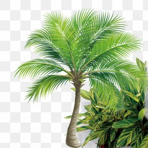 Coconut Tree - Coconut Tree Icon PNG