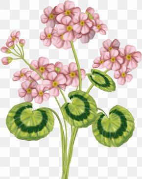 Pink Flower - Pink Flower Green Color PNG