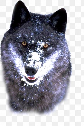 Alaskan Tundra Wolf Bosnian Coarse-haired Hound Arctic Wolf Siberian Husky PNG