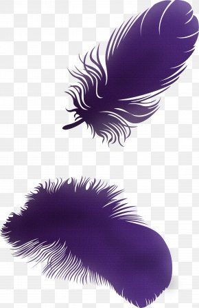 Feather Picture Feather Wings Material - Feather Clip Art PNG