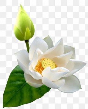 Lotus - Ittar Clip Art PNG