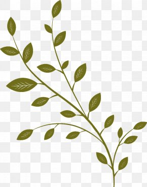 Tender Green Leaves Cartoon - Twig Drawing Cartoon Follaje PNG