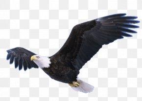 Flying Eagle Transparent - Neversink Reservoir Bald Eagle Bradley Bird PNG