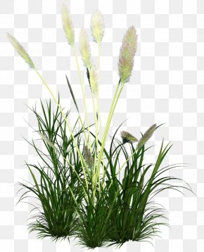 Reed Grass Ornament - Icon PNG
