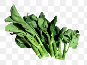 Green Kale Leaves - Chinese Broccoli Vegetable Kohlrabi Cauliflower Hot Pot PNG
