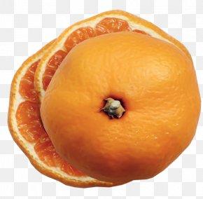 Orange - Clementine Mandarin Orange Tangerine Fruit Blood Orange PNG