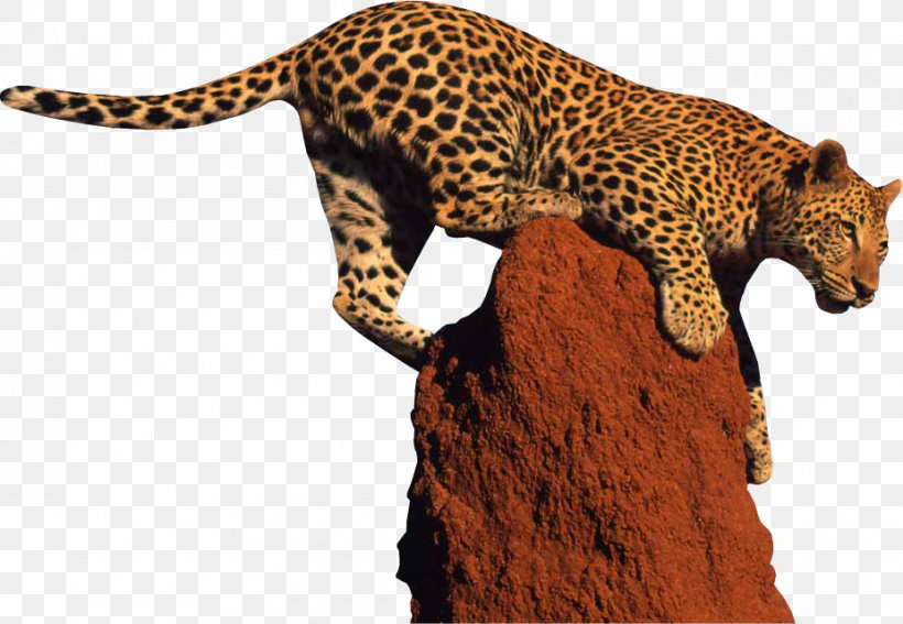 Leopard Giraffe Jaguar Clip Art, PNG, 926x641px, Snow Leopard, Amur Leopard, Animal, Big Cat, Big Cats Download Free
