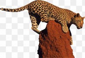 Leopard Clipart - Leopard Giraffe Jaguar Clip Art PNG
