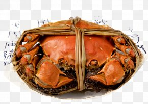 A Crab - Giant Mud Crab Eating Autumn Food PNG