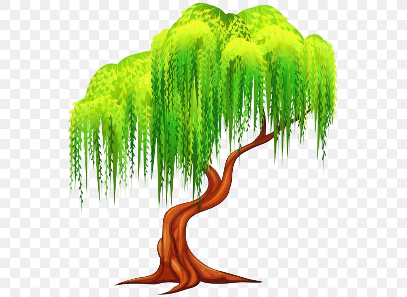 Tree Weeping Willow Clip Art Illustration Plants, PNG ...