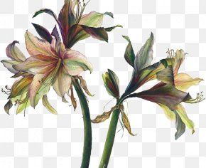 Lily - Floral Design Art Watercolor Painting Drawing PNG