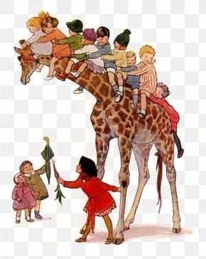Giraffe - Northern Giraffe Drawing Cartoon Illustration PNG