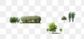 Tree - Tree Download Leaf Icon PNG