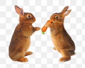 Two Rabbits - Easter Bunny Hare Carrot Stock Photography Pet PNG