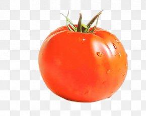 Bush Tomato Plant - Tomato PNG