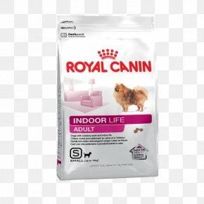 Puppy - Poodle Labrador Retriever Royal Canin Dog Food Pet PNG