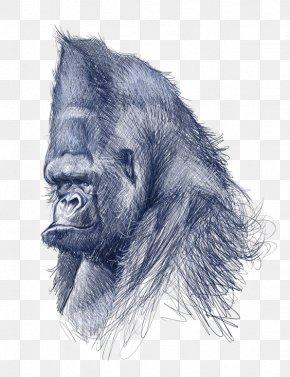 Gorilla - Common Chimpanzee Gorilla Drawing Art Illustration PNG