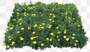Flower Garden - Flower Download Plant Clip Art PNG