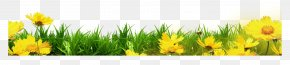 Yellow Floral Grass Bottom Border - Template Clip Art PNG